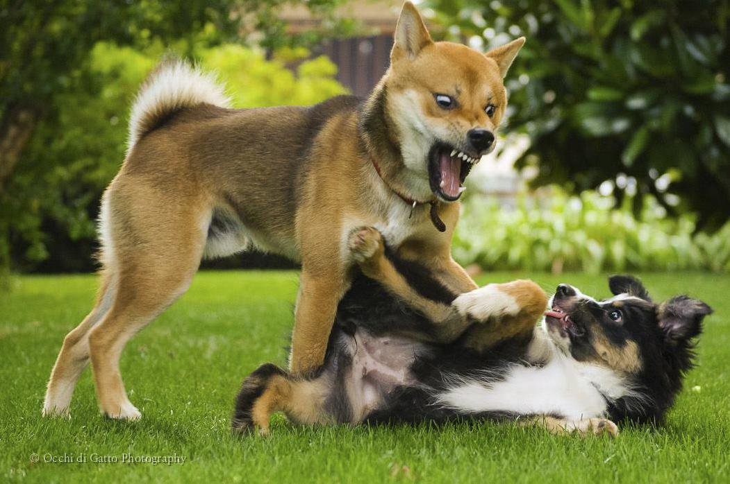 Addestramento cani: aree cani e socializzazione Perché dico no