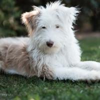 10 errori da evitare quando si adotta un cane (da canile o rescue)