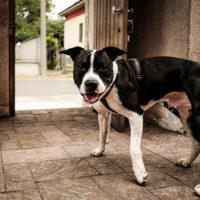 Cambiare ciò che un cane crede (storia di Black)