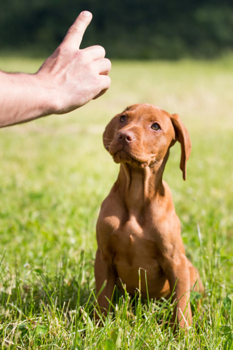 addestramento cani, ciò che i proprietati non vogliono, educazione cinofila, educatore cinofilo, educatore cinofilo legnano, addestramento cani legnano
